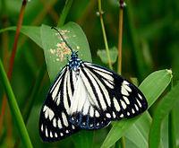 Tirgus Cfd Stratēģija Kuras Pamatā Ir Gartley Butterfly