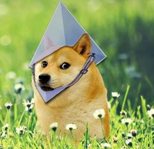 binārās opcijas suņiem