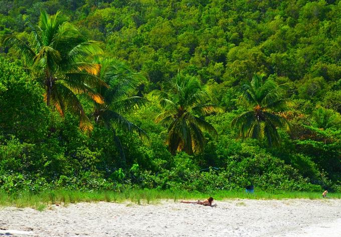 pelnīt naudu la palmas salā