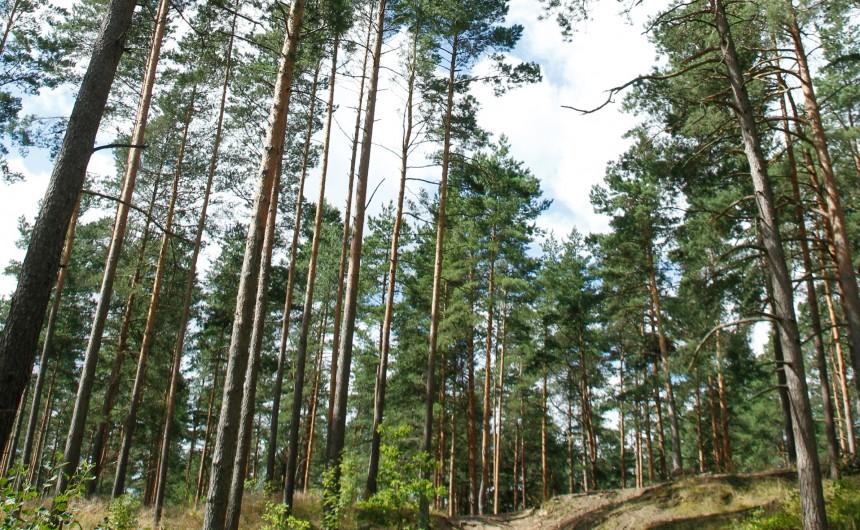 meža izpeļņa internetā)