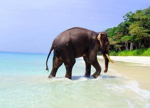 ziloņu izsekošana internetā, kā nopelnīt naudu