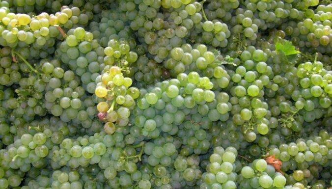 Pārbaudītas vērtības vīna plauktos: kā izvēlēties izcilu vīnu