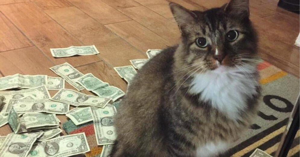 kaķis pelna naudu
