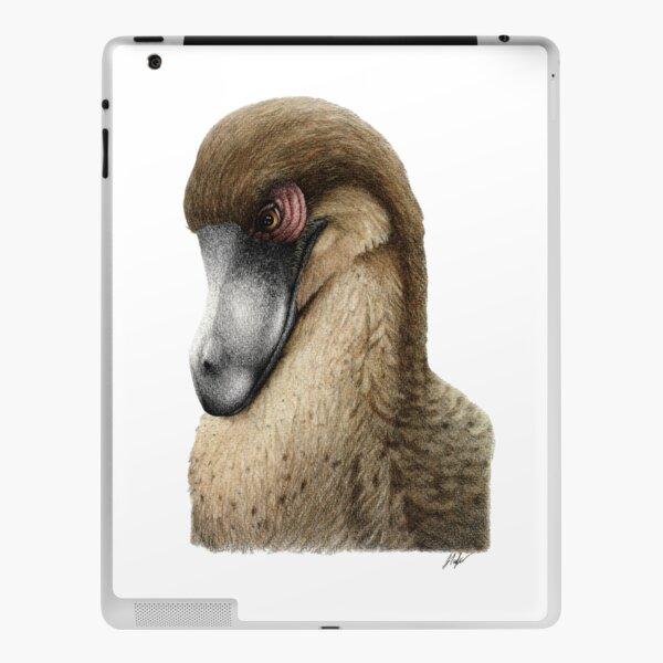 dodo picas variants)