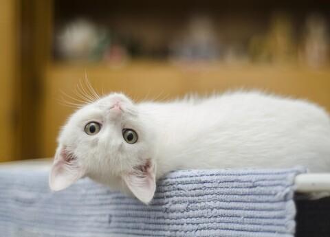 kaķis pelna naudu)