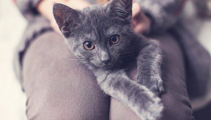 kaķu iespējas